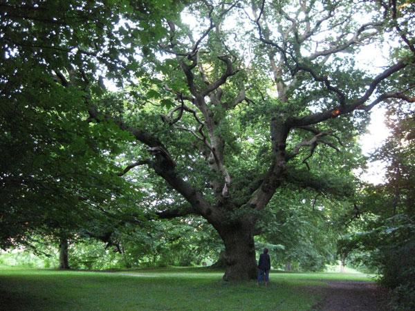 tree_600_450